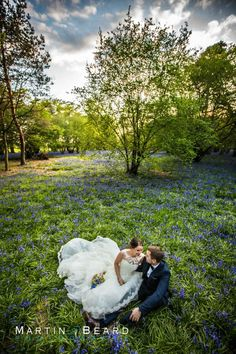 Haughley Park bluebell wood - Martin Beard Photography