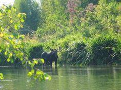 Little Spokane River ~ Spokane, WA