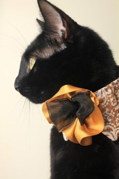 Contemporary Cat Collar with Gokd Flower