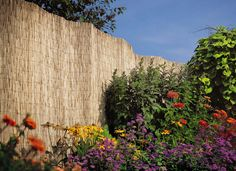 "Natural Reed Fences 39"" or 78"" High - Garden Fences   Gardeners.com"