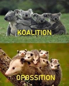 Koala Funny Funny Koala meme The post a - Koala Funny - Koala Funny Funny Koala meme The post appeared first on Gag Dad. The post Koala Funny Funny Koala meme The post a appeared first on Gag Dad. Koala Meme, Funny Koala, Funny Cats, Funny Shit, 9gag Funny, Funny Memes, Hilarious, Funny Sports Pictures, Funny Meme Pictures