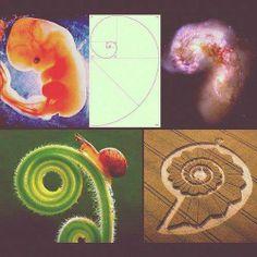 Fibonnacci - Geometria Sagrada