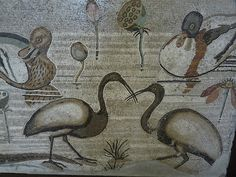Roman Mosaic depicting different species of acuatic birds. Pompeii. Museo Archeologico Nazionale, Naples.