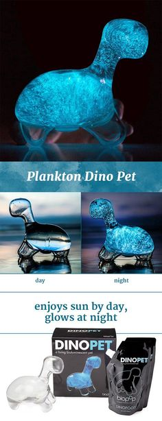 """Interactive aquarium full of bioluminescent plankton called dinoflaggelates (""""dinos""""). The plankton illuminates the dinosaur-shaped environment when you gently shake it. Just let them bask in indirect light during the day, and they'll treat you to a soft blue light show at night."""