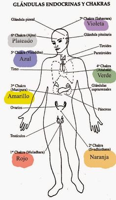 TU SALUD: Relación de Los Chakras, Glándulas Endocrinas y Or...