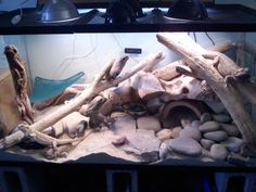 Reptile Tank Bearded Dragon | .com - Reptile Supplies, Vivarium, Reptile Accessories, Reptile ...