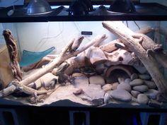 Reptile Tank Bearded Dragon | .com - Reptile Supplies, Vivarium, Reptile Accessories, Reptile ...