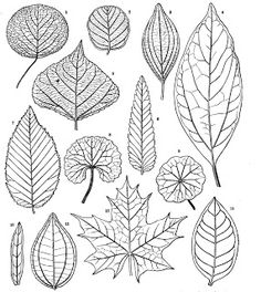 leaves  pattern