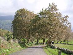 Azorean spirit Azores, Islands, Country Roads, Spirit, Funny, Island
