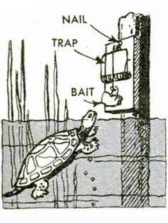 how to build a crab trap ark