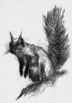 Bushy tail, Artist Sean Briggs producing a sketch a day, prints available at https://www.etsy.com/uk/shop/SketchyLife  #art #drawing #http://etsy.me/1rARc0J #squirrel