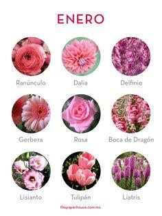 Flores de Enero. #FloresDeTemporada #FloresDeEnero #flores #enero #ThePaperHouse