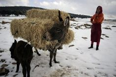 simple life in Ifrane, Morocco
