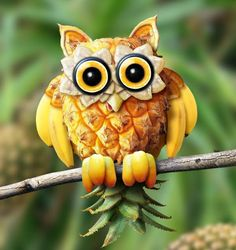 Owl fruit!
