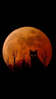Orange moon with black cat