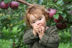 Apple Picking! - Nothing says fall like fresh picked apples (and cider and donuts, too!).