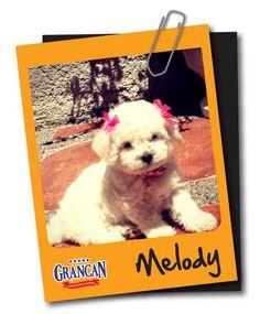 Ella es Melody, una hermosa perrita que pertenece a nuestra amiga Gaby Orozco.