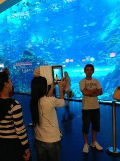 Dubai Mall Aquarium, Dubai, UAE. I believe they call this shooting fish in a barrel