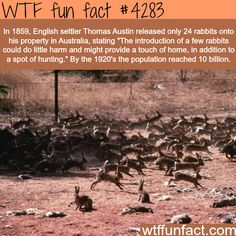 #WTF Facts : funny, interesting