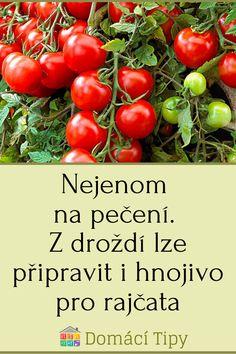 Gardening, Vegetables, Outdoor, Garden, Diet, Outdoors, Garten, Vegetable Recipes, Veggie Food