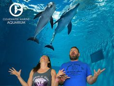 """I loved being at the Clearwater Marine Aquarium where they focus on rescue, rehab and release for dolphins like Hope and Winter who also starred in the movies """"Dolphin Tale!"""" At this incredible animal hospital, they save turtles, birds and marine mammals. Thank you to Jason @BeardedWriter for sharing the day and the green screen with me. #myclearwater #Regram via @wesaidgotravel"""