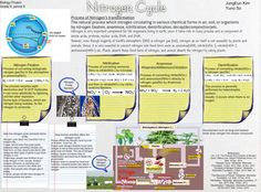 The nitrogen cycle is the process by which nitrogen is converted between its various chemical forms. This transformation can be carried out through both biological and physical processes. Important processes in the nitrogen cycle include fixation, ammonification, nitrification, and denitrification. #Glogster #NitrogenCycle