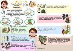 Home And Garden, Nursery, Nature, Flowers, Plants, Gardens, Naturaleza, Baby Room, Child Room