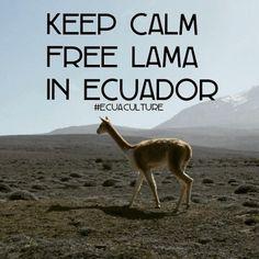 #keepcalm #freelama #lama #Ecuador #Ecuaculture