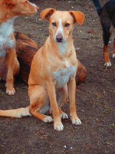 ACE Animal Care España - De refugio bezoeken Doge, Pet Care, Labrador Retriever, Animals, Shelters, Labrador Retrievers, Animaux, Animal, Animales
