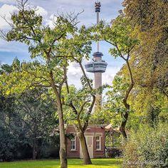 Have you ever been to The Parc ( Het Park)? ▫ #Rottergram by @Roijaards . . . . . #rotterdam #hetPark #theParc #visualambassadors #euromast #euromast010 #nature #naturelovers #portofrotterdam #urbanphotography #Roffa #rotturban #skylinerotterdam #architectureporn #Architecture #rotterdamcity #architecturelovers #trees #parc #cityparc