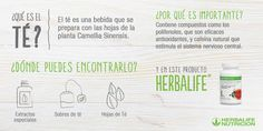 Proyecto Mamá Herbalife Chile Herbalife Chile, Herbalife Nutrition, Journal, Soya, Club, Central Nervous System, Healthy Living, Wellness, Journal Entries