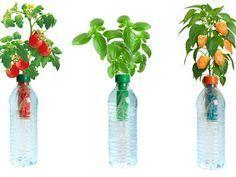 Petomato repurposes plastic water bottles as micro hydroponic gardens