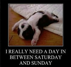 need a day funny quotes cute weekend funny quote funny quotes days of the week humor