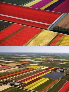 More art inspired by aerial photos - tulip fields