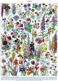 Wildflower poster. I wish I could paper my house with this!