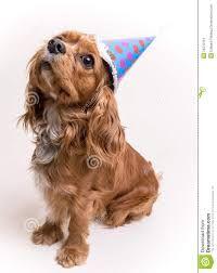 Resultado de imagem para cachorrinho festa