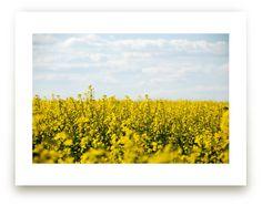 """Yellow flower field"" - Photography Limited Edition Art Print by Alexandra Dzh. Light Bulb Plant, Colored Light Bulbs, Unique Wall Art, Custom Art, Yellow Flowers, Wall Art Prints, Art Decor, Tapestry, Landscape"