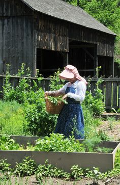 Girl harvesting Radishes at Quiet Valley Living Historical Farm, Stroudsburg Summer Tour Opening and Summer Garden Party on Saturday June 15, 2013  Where & When, Pennsylvania's Travel Guide.  www.whereandwhen.com  Photo courtesy of Quiet Valley Living Historical Farm