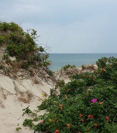 Wild roses in the sand dunes near the sea at our cottage in Denmark. Danish Christmas, Photos Voyages, Copenhagen Denmark, Homeland, Belle Photo, Places To See, Wander, Scandinavian, In This Moment