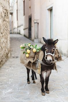 Donkey for greek or mediterranean style wedding | #greek #wedding #inspiration
