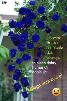 Humor, Good Morning, Humour, Moon Moon, Funny Humor, Lifting Humor, Chistes, Funny Jokes