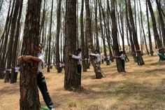 Two thousand and one Nepalese school children hug trees in a bid to set a new world record for the largest tree hug as they celebrate World Environment Day in the forest of Gokarna village, on the outskirts of Kathmandu on June People Hugging, One Green Planet, World Environment Day, Life Symbol, Guinness World, World Records, Heaven On Earth, Trees To Plant, Around The Worlds