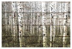 Aspen Highland, Reclaimed Barn Wood on OneKingsLane.com