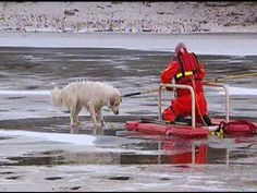 An Indianapolis firefighter rescued a Great Pyrenees dog that had become stuck on the ice of the White River in Indianapolis