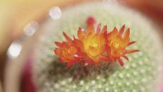 Groentestoofpot met kikkererwten en cactus.