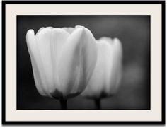 Fine Art Photography   by VanillaExtinction on Etsy, $20.00