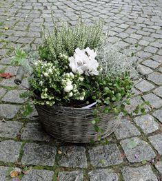 Risultati immagini per Pflanzung ich gammal zinkhink - Bepflanzung Container Flowers, Flower Planters, Garden Planters, Flower Pots, Flowers Garden, Amazing Gardens, Beautiful Gardens, Gemüseanbau In Kübeln, Winter Planter