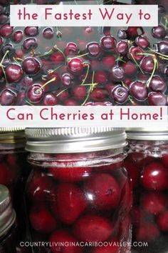 Canning Cherries – Water Bath Preserving – Country Living in a Cariboo Valley Home canning cherries can be done quickly! Here's step by step instructions on how to can cherries. What to do when canning cherries. Canning recipe can be found here. Pressure Canning Recipes, Home Canning Recipes, Canning Tips, Cherry Recipes Canning, Pressure Cooking, Canning Pressure Cooker, Pressure Cooker Chicken, Pressure Cooker Recipes, Canned Cherries