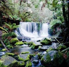 Top things to do in Tasmania It is such a picturesque place. Look forward To seeing it.