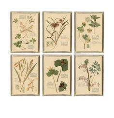 Fall Season Bouquet Leaves Artistic Rust Toned Herbs Blooms Wedding Botanical Print,60CM Over Knee High Socks